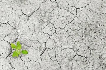 Cómo afrontar el cambio climático en las empresas: cada acción cuenta